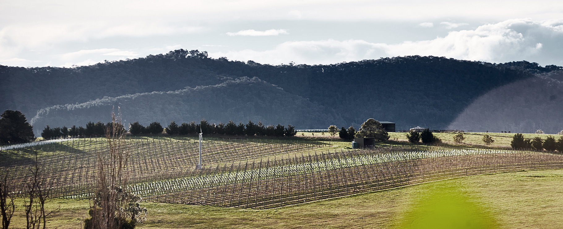 Hero shot of Mount Mary Vineyard