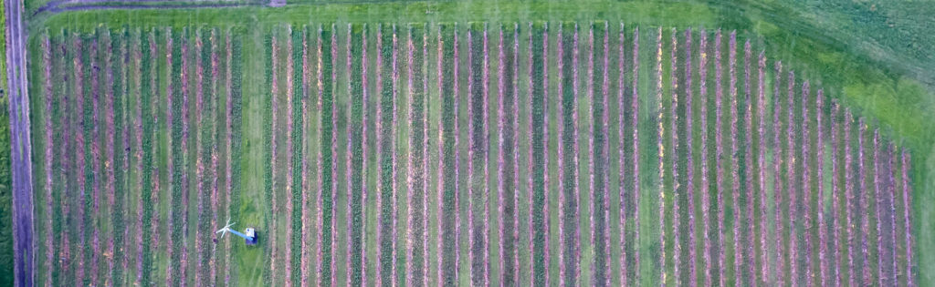 Aerial Vineyard Photo